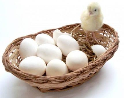 אסור לשים את כל הביצים בסל אחד - טיפ חובה לכל הסוחרים באינטרנט ובדרופשיפינג בפרט